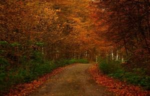 autumn small